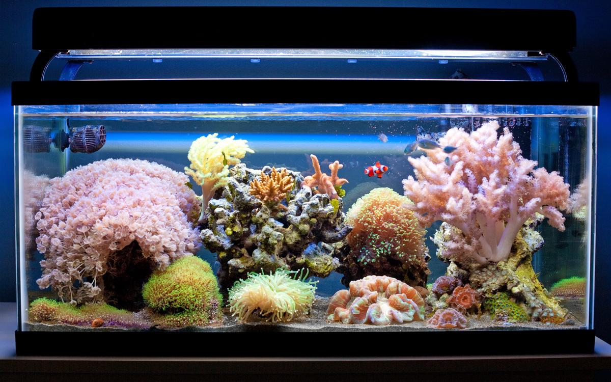 Aidan S Aquarium