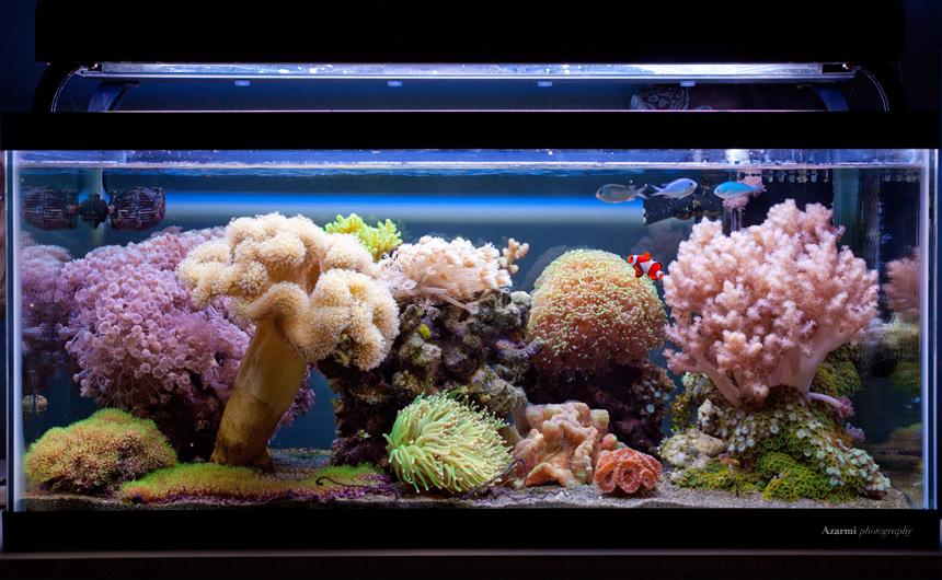 Rod 39 S 40g Soft Coral Reef Aquarium Members Aquariums