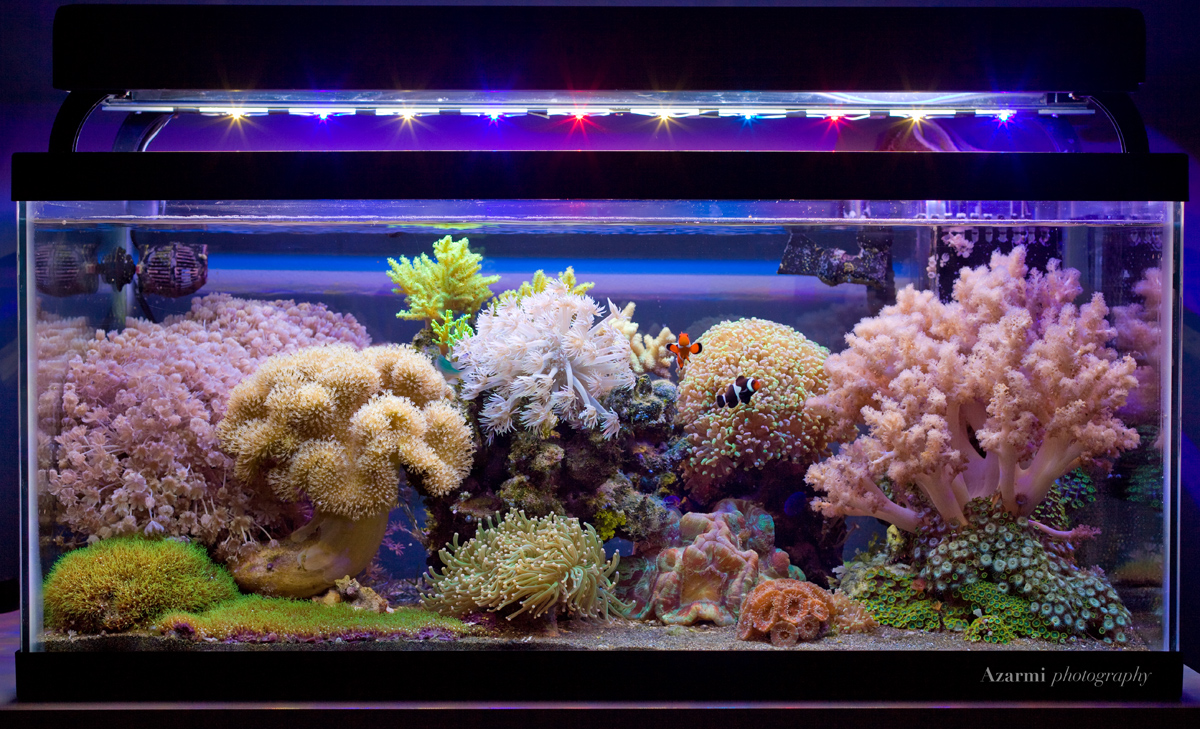 Soft Coral Dominated Tanks... Lets See em - Page 22 - Reef Central ...